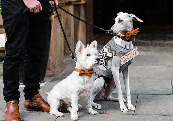 thinniest-rescue-dog-walks-owner-aisle-william-11