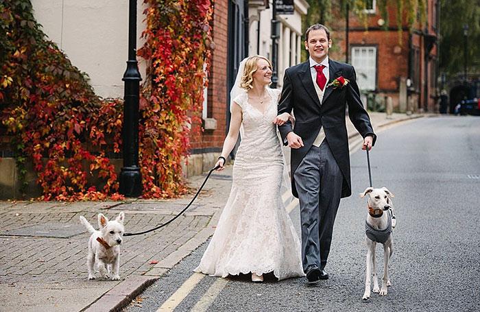 thinniest-rescue-dog-walks-owner-aisle-william-12