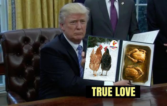 Trump Love Chicken