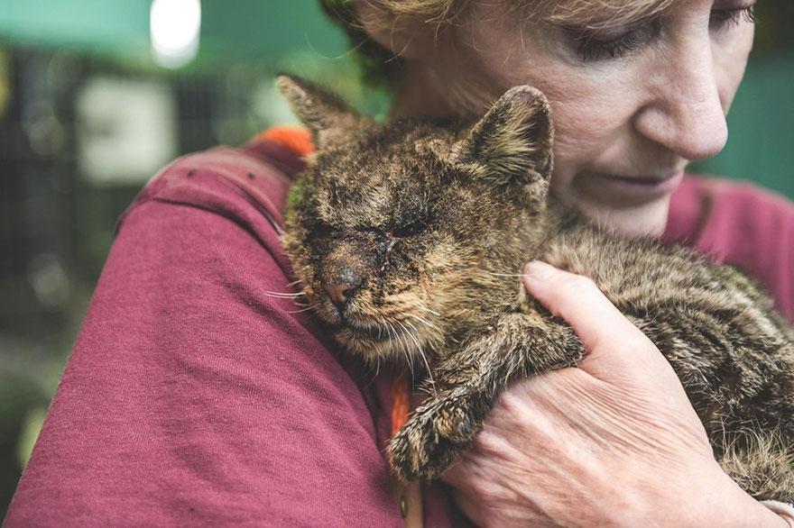 untouchable-cat-sarcoptic-mange-hugged-valentino-1