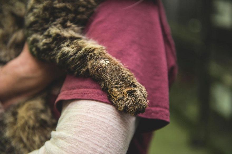 untouchable-cat-sarcoptic-mange-hugged-valentino-3