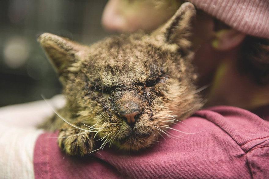 untouchable-cat-sarcoptic-mange-hugged-valentino-4