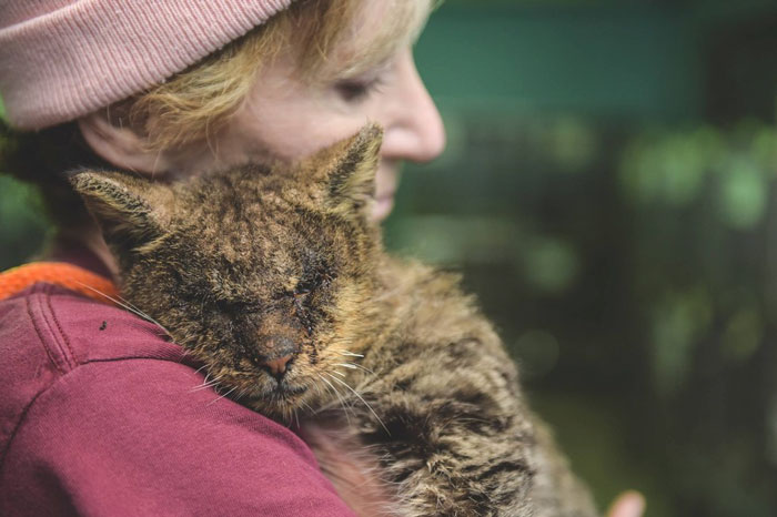 Cat No One Dared To Touch Finally Found A Human Who Hugged Him