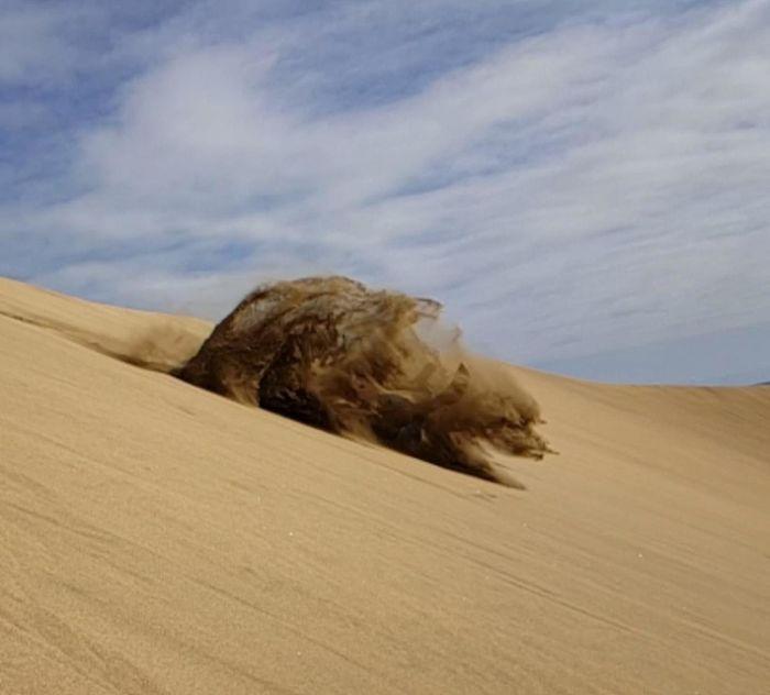 I Kinda Created A Sandbear When I Crashed Into The Sand