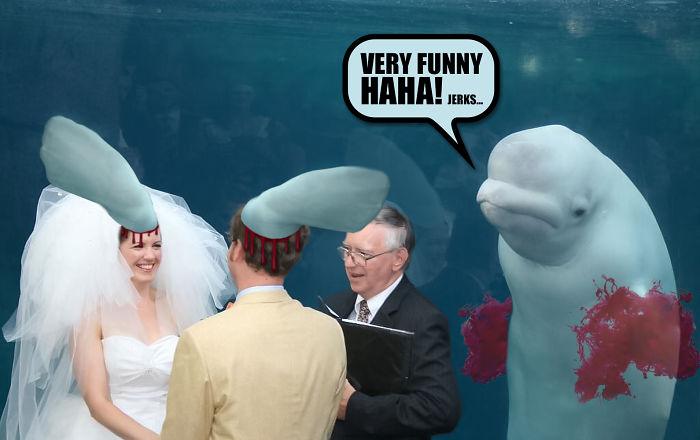 Very Funny, Haha!