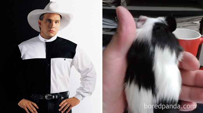 Garth Brooks Or This Guinea Pig?