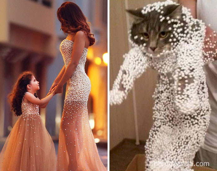 Mom And Daughter In Their Fancy Dresses Or This Cat?