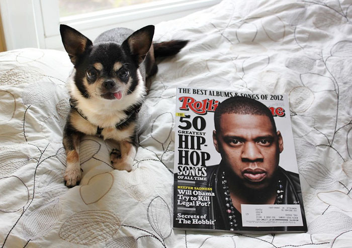 woman-brings-home-senior-dog-24-hours-jay-z-10