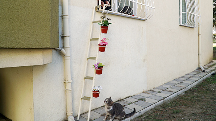 this woman built a cat ladder for strays so they could come in when it s cold outside bored. Black Bedroom Furniture Sets. Home Design Ideas