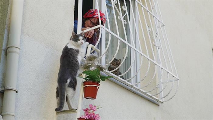 Esta mujer construyó una escalerilla para que los gatos callejeros pudieran entrar a su casa cuando hace frío