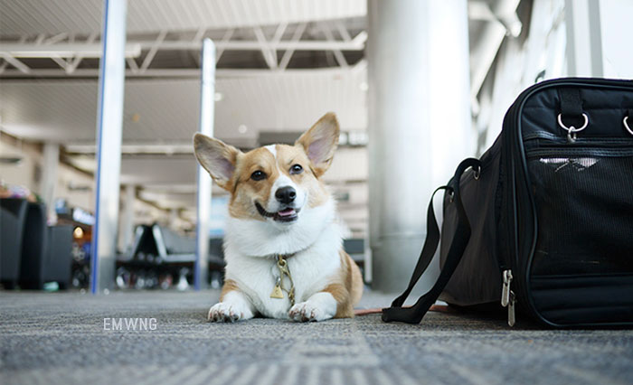 woman-dog-poop-the-airport-revenge-18a
