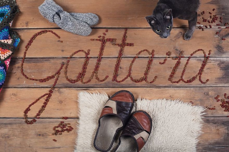Gattara – The Italian Untranslatable Word Describes A Woman, Often Old And Lonely, Who Devotes Herself To Stray Cats