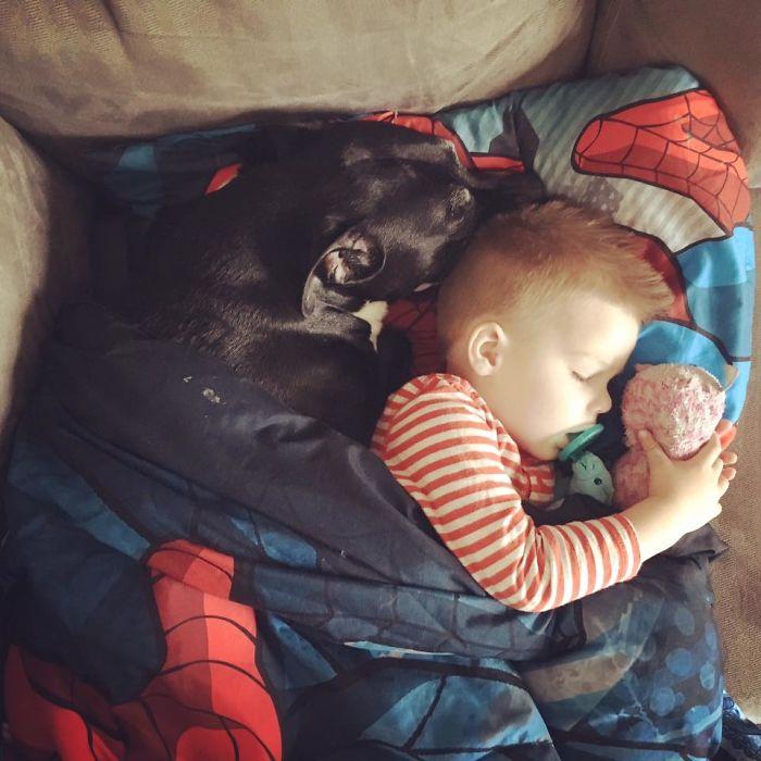 Vicious Pitbull Cuddling His #1 Boy After A Seizure. The Horror.