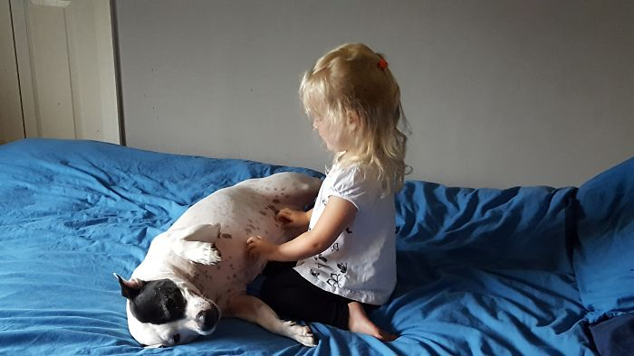 My Staffy Viciously Having Her Tummy Tickled By My 3 Yr Old.