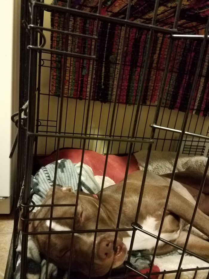 So Viscous She Is Trying To Rip Three Her Crate Bars!