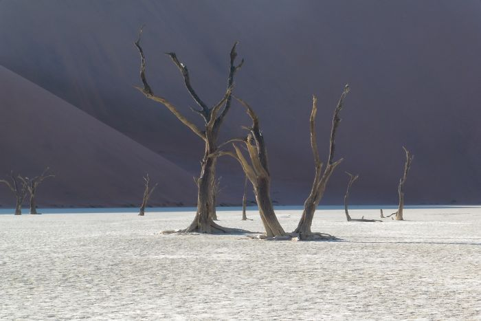My Pictures From The Namib Desert Look Like They Were Taken On Another Planet!