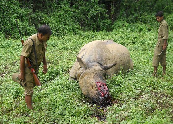 29-06-15-Kaziranga-Rhino-killed-1-58c829c937a64.jpg
