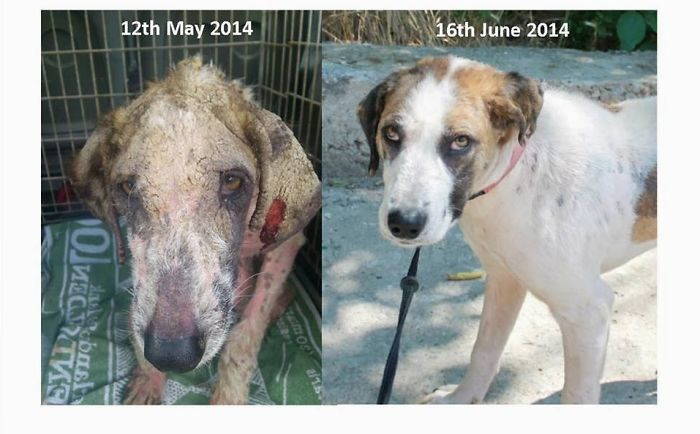 Before And After – A Street Dog Rescue Story