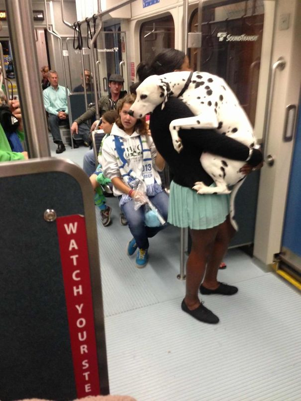 Poor Dog's Terrifying First Train Ride