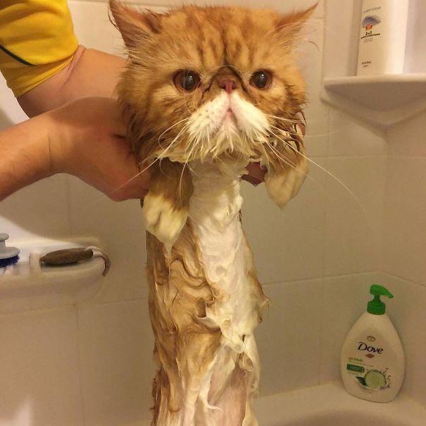 Melting Cat!