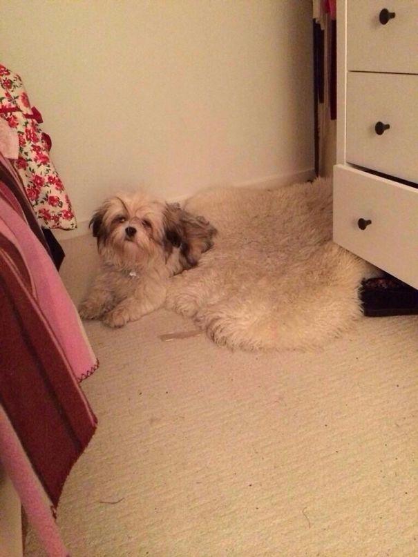 Send Help, My Dog Is Melting