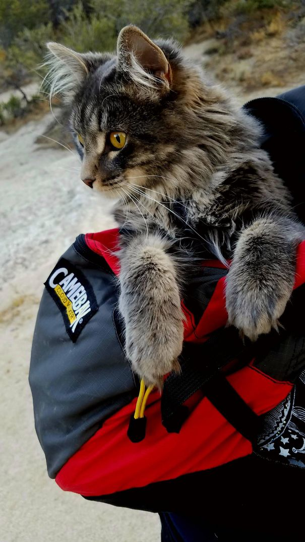 Cat In A Backpack. His First Time Hiking