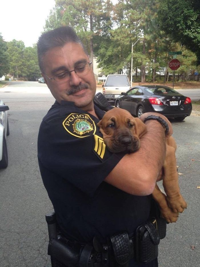 Perro nuevo en el departamento de policía
