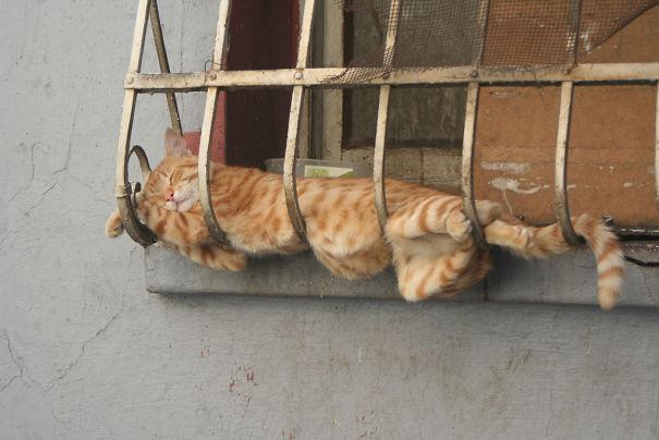 No Prob, It's Comfortable Enough