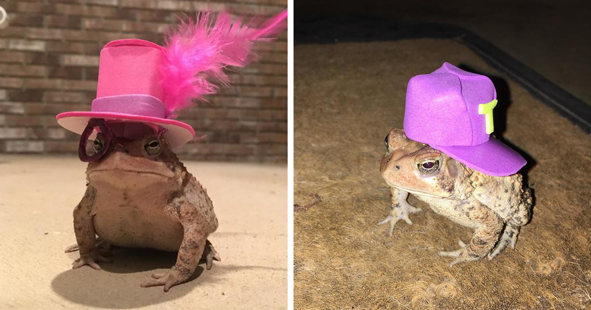 This Toad Kept Coming To This Guy's Porch, So He Started Making Him Tiny Hats