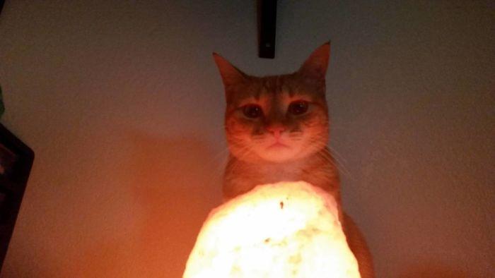 My Cat Looks Like She's Summoning Satan