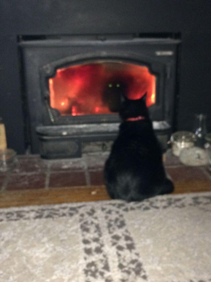 Creo que mi gato intenta invocar un demonio