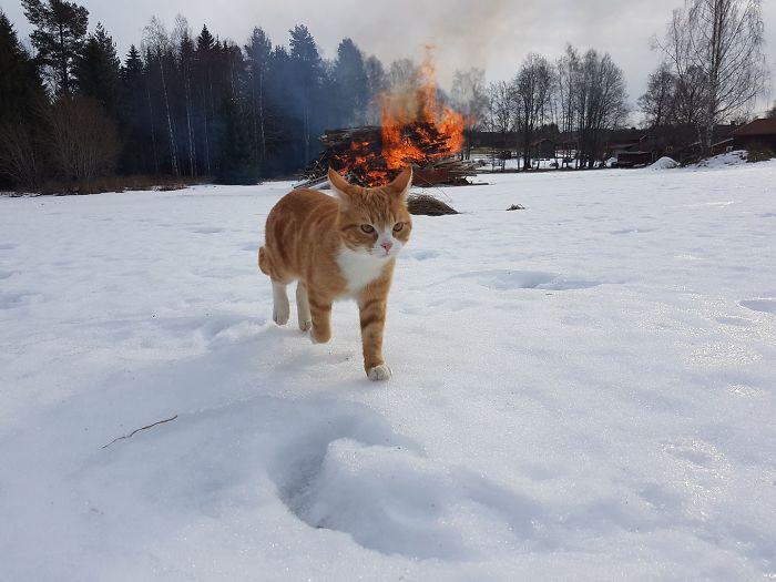 Gato pirómano huyendo de la escena del crimen