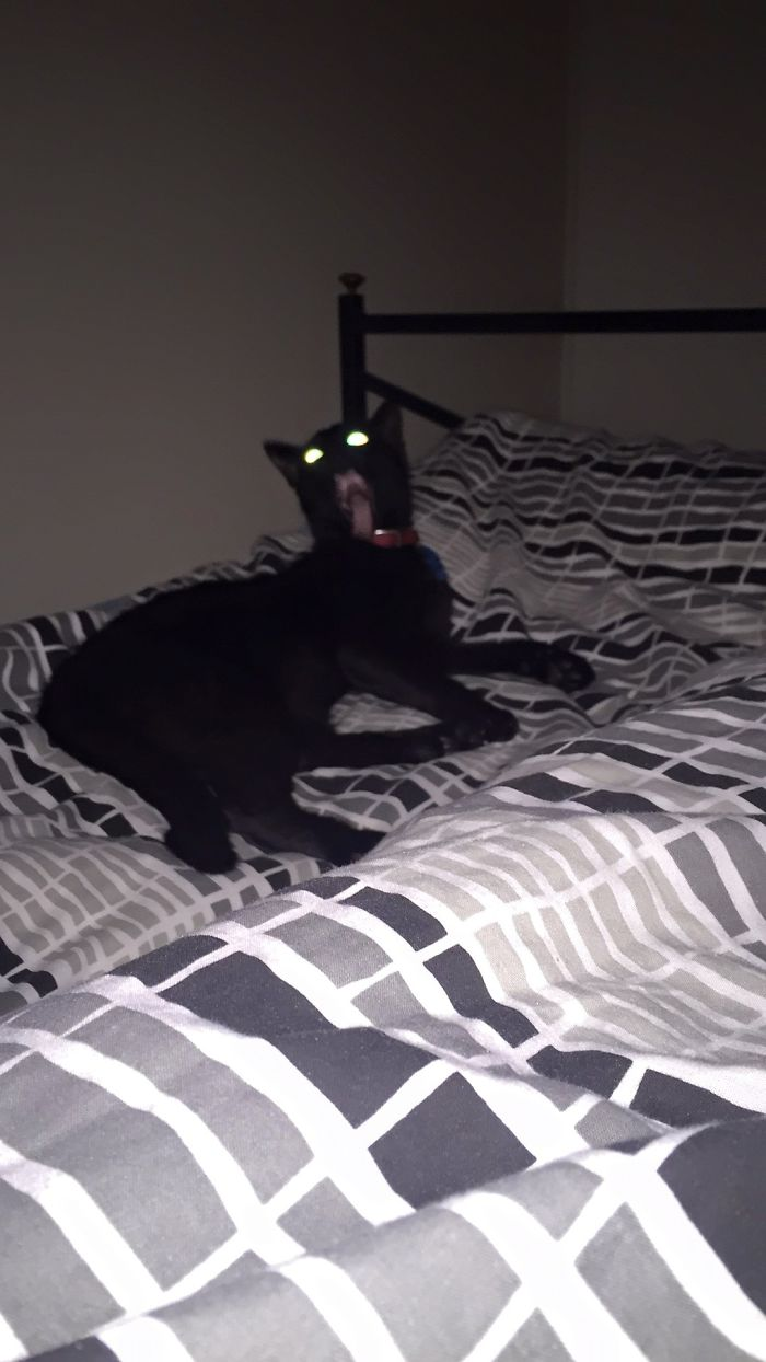 Tried To Take A Photo Of My Cat, Summoned A Demon