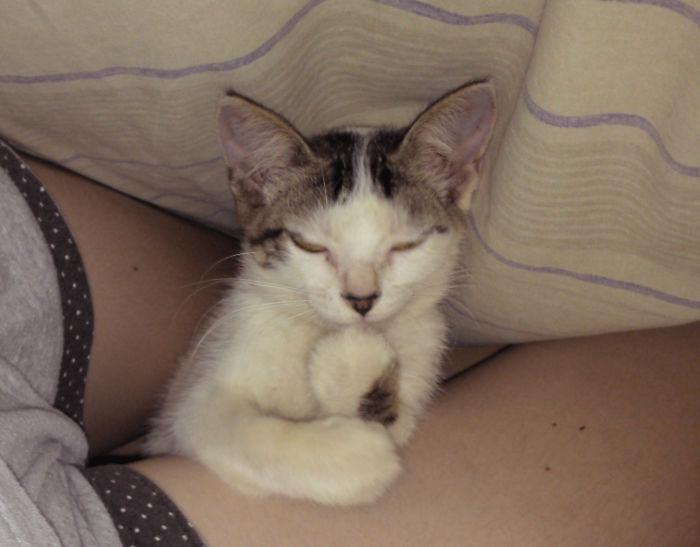 Los malvados planes de mi gato bajo la sábana