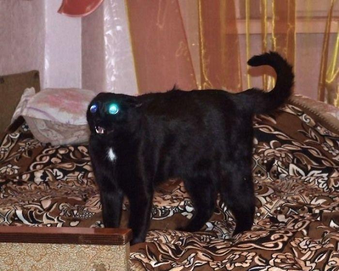 Un gato... ¿adorable?