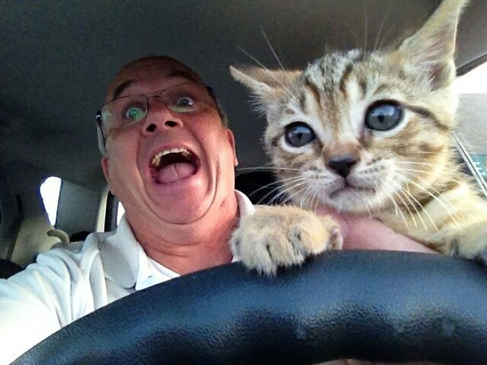 My Dad Brought A Kitten Home And Let It Drive