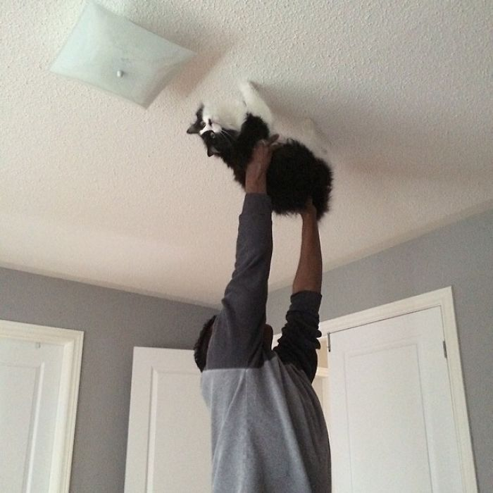 "Walked On My Husband Walking The Cat Across The Ceiling While Singing ""spider Cat, Spider Cat, Does Whatever A Spider Cat Does"""