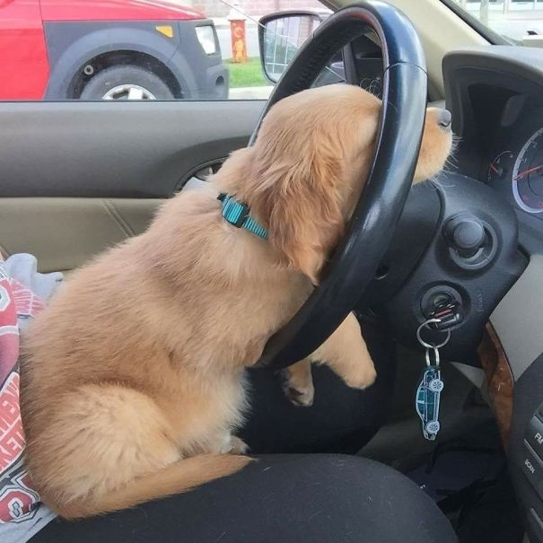 When You're On That 9-5 Grind Stuck In Traffic But You're Just A Puppy