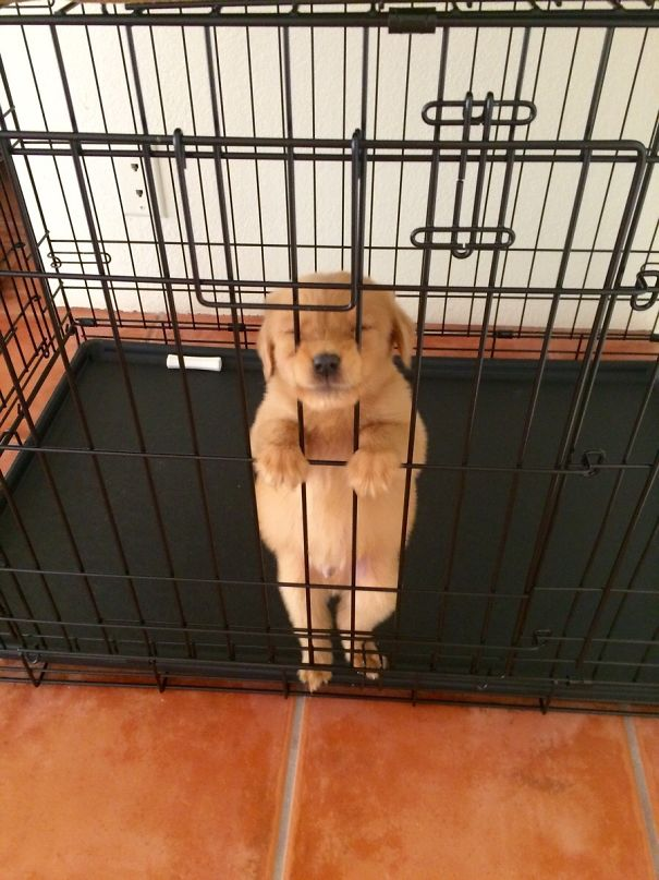 Let Me Out Of This Kennel Please!