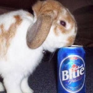 BeerBunnyBoozez