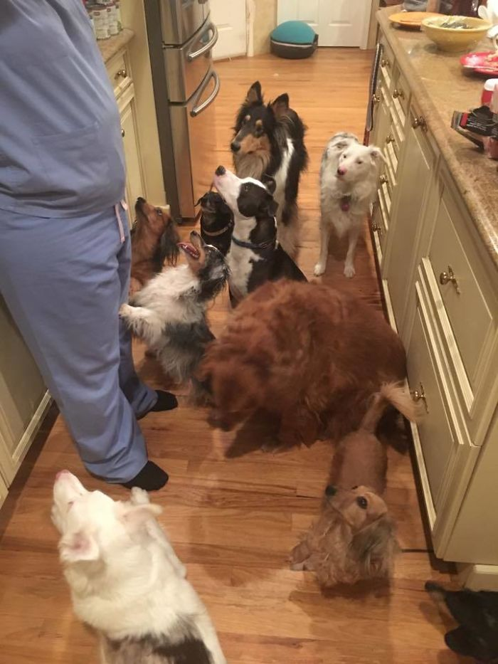 My Mom Rescues Dogs. She Has A Lot Of Kitchen Helpers