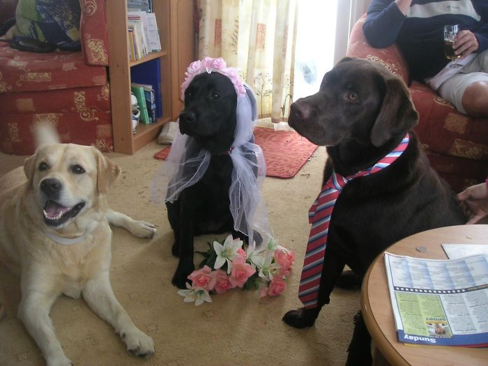 Here Is A Standard Picture Of My Dogs Getting Married