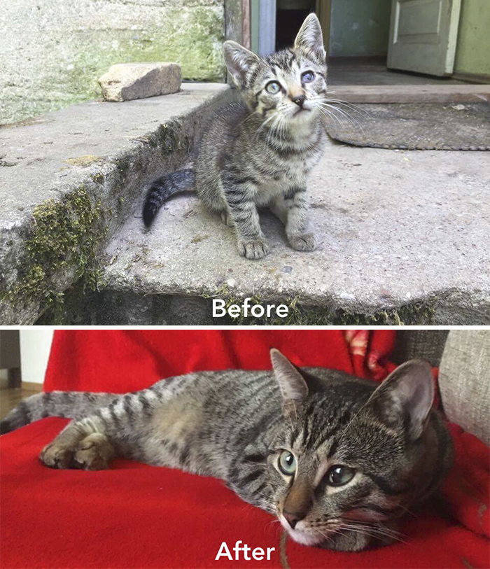 A Girl From Latvia Rescued More Than 350 Homeless Cats During Last 2 Years