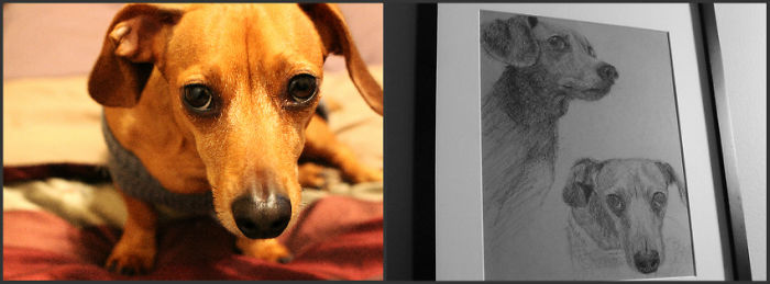 My Friend Drew This Of My Doxie When She Passed