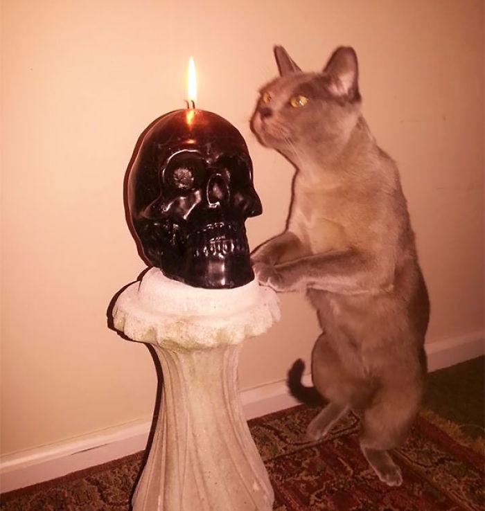 Something Something Dark Side Cat