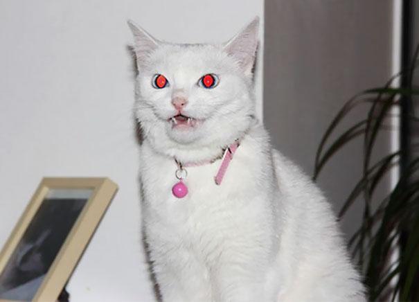 Demon chat