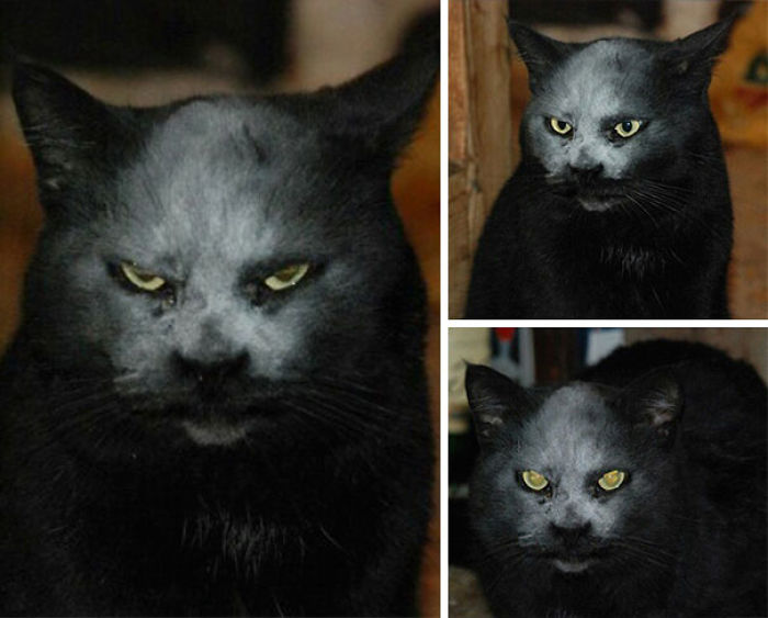 Hi Is Not A Devil. He Is Just A Cat In Flour