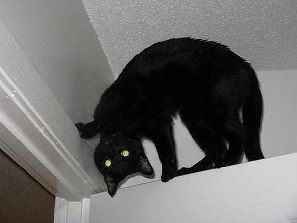 Demon Cat Meme