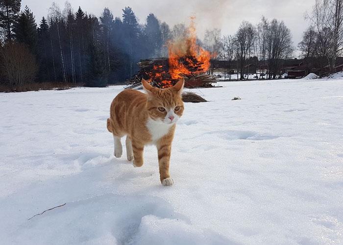 20 Fotos que demuestran que los gatos son el realidad demonios