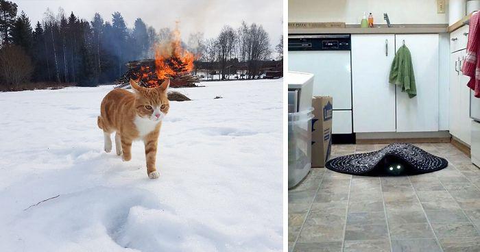 bad cat 2016 download